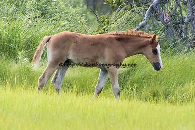 Tuleta Star's 2015 Foal