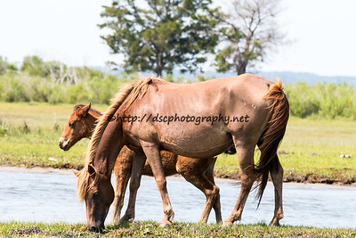 Wild Island Orchid & Colt