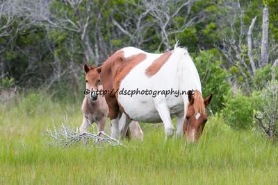 Witchkraft/Friendly Girl's 2015 Foal