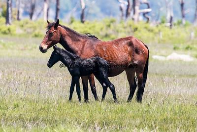 Pappy's Pony's 2015 Colt
