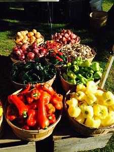 Kathy Avellino - market harvest