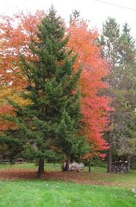 Fall trees - Taken in West Woodstock      Diane Atwood,  2741 Cox Dist  Rd   Woodstock, Vt   05091