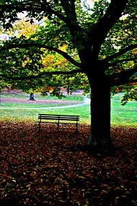 Faulkner park - Photo taken by Amanda M  Chamberlin