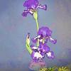 4-6-15 Iris Painted