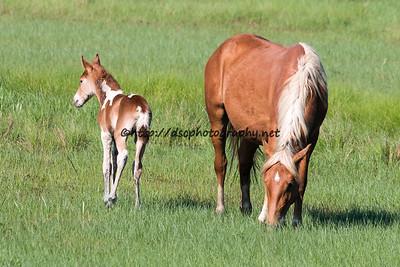 Dreamer's Gift's 2015 Foal