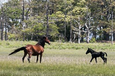 Pappy's Pony's 2015 Foal