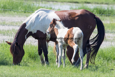 Miracle's Natural Beauty & Foal
