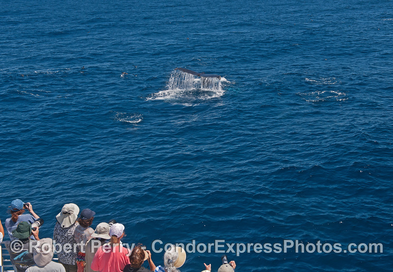 Humpback and people.