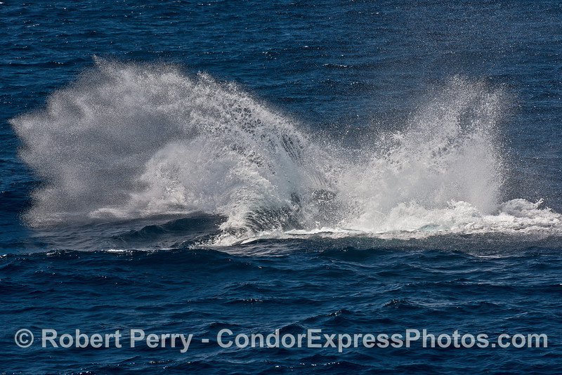 Image 2 of 2 in a row:   humpback whale tail throw.