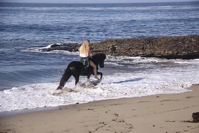 2015 Seahorses