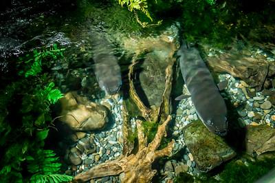 Kelly Tarlton's Sea Aquarium