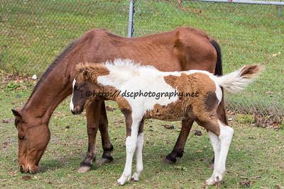 Firestar & Foal