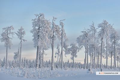 arctic15__0525