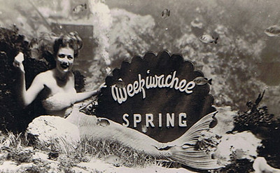 Weeki Wachee Mermaids by the Atomic Grog