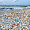 Sanibel Island Seashells by Anne McKinnel