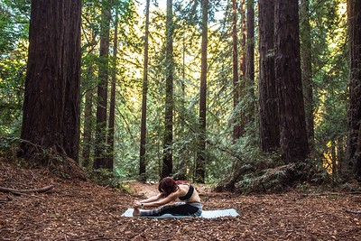 Redwood Region Park (Yoga)
