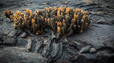 Galapagos - JudyRawson S66  judyrawsonphotography.com