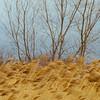 JOED VIERA/STAFF PHOTOGRAPHER- Middleport, NY-Wind blows over a wheatfield.