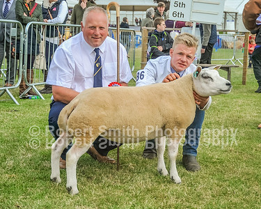 Beltex judging @Royal Highland Show 2015