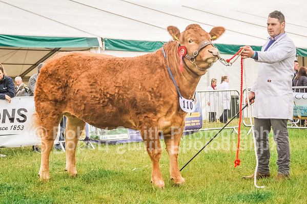 Northumberland County Show 2015