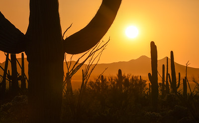 Sunset at Saguaro National Park.