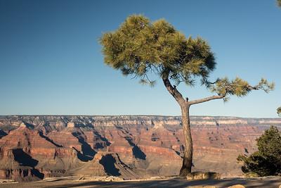 Lone Pine - Grand Canyon