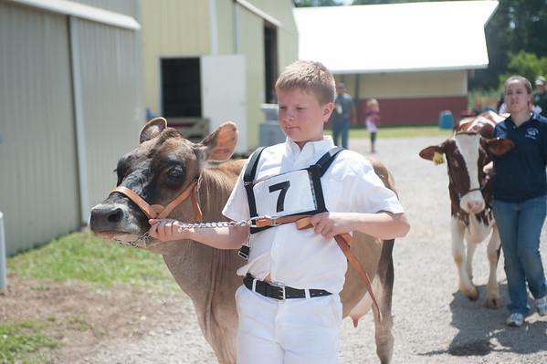 JOED VIERA/STAFF PHOTOGRAPHER-Lockport, NY-Hunter Gardner 13 take his cow back to its stall at the Niagara County Fair.