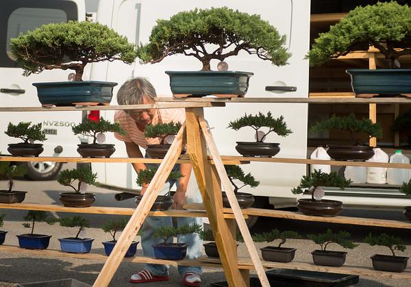 JOED VIERA/STAFF PHOTOGRAPHER-Lockport, NY-Myagi Lee   sets bonsai trees up at his stand on Transit Road and Robinson Road.