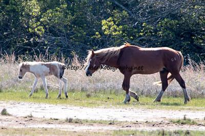 Anne Bonny's Foal & Ken