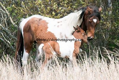 Skylark & 2015 Foal-Virginia/Ginny