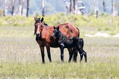Pappy's Pony & Raven