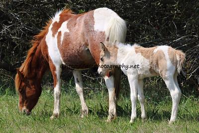Anne Bonny & 2015 Foal-Chayni