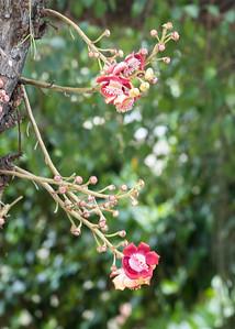 Parasitic flowers