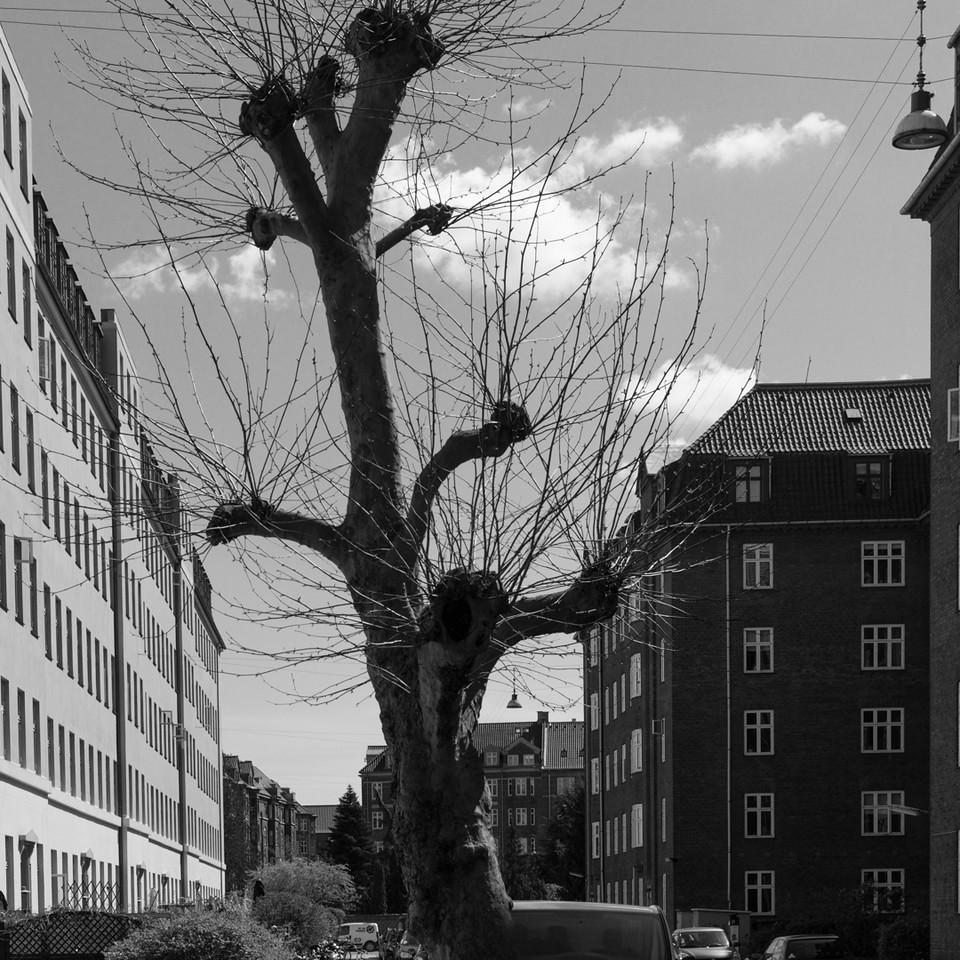 köbenhavn_amager_2015-05-02_140407