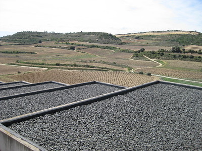 From Bai Gorri vineyard, Logroño - Johanna Frymoyer *12