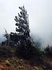 025 windy snow on tree