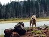 112 Murphy at lost lake