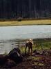 110 Murphy at lost lake