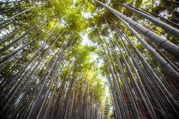 Bamboo Breeze • Kyoto