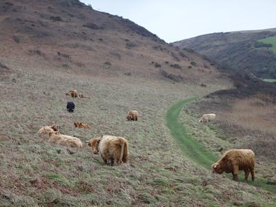 We met these very cool cows en route