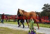 15-08-24_Red_3084-A