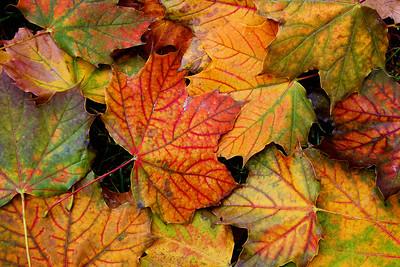Leaves....