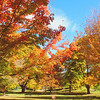 Finch Arboretum....