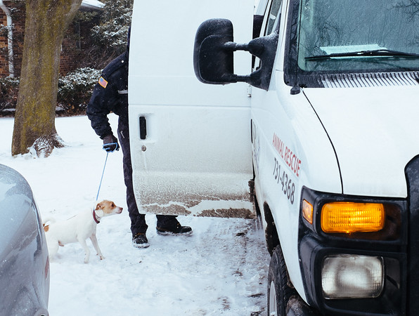 JOED VIERA/STAFF PHOTOGRAPHER- Lockport, NY-An SPCA officer places a dog seized from a house on Lincoln Drive into his van. Monday, January, 26, 2015