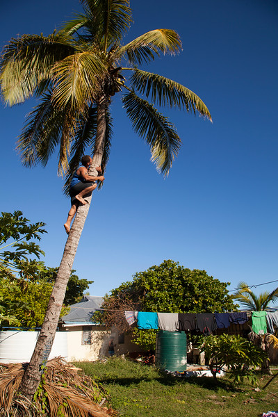 Kelsey braves the heights to take down a coconut for a light snack and hydration before dinner.