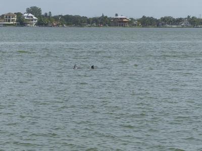 Florida 12 23 2015 Bowditch beach