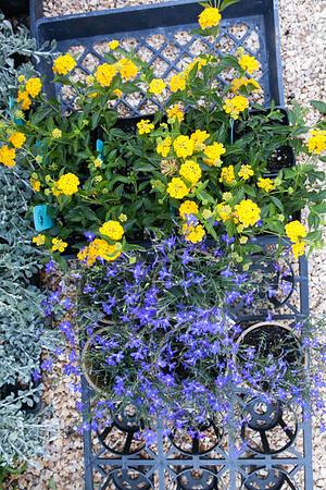 Flowerland-July2015-3016
