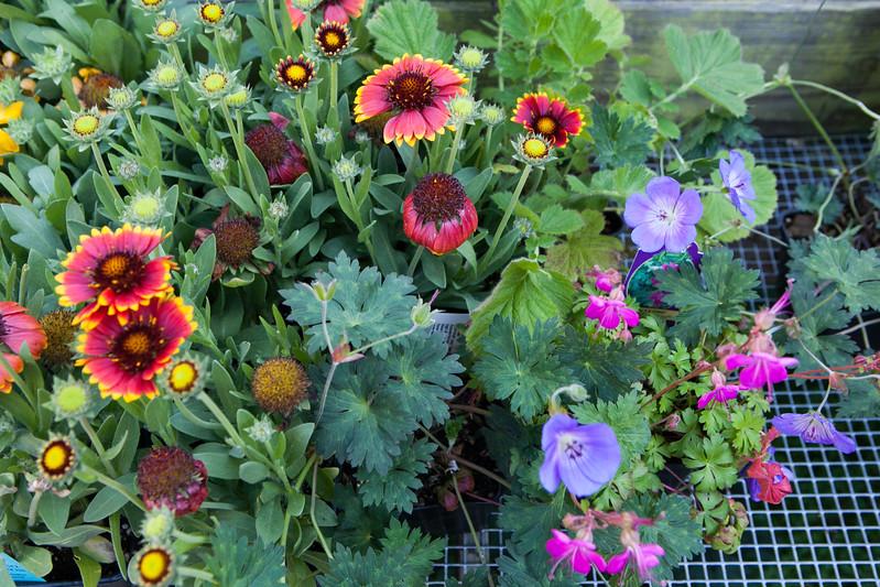 Flowerland-July2015-3020