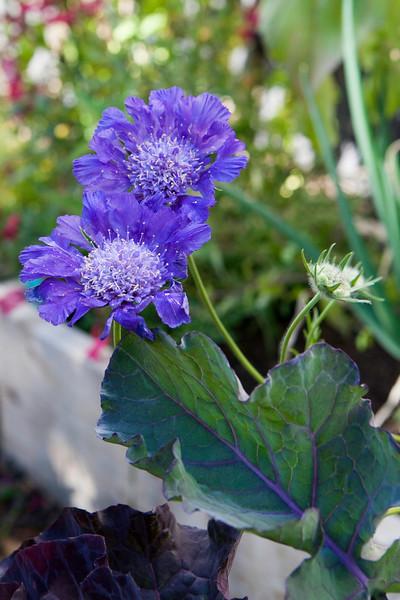 Flowerland-July2015-3045