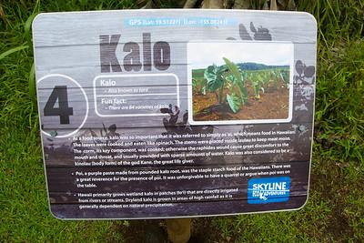 Kalo means taro